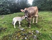 Almsommer 2017 - Bei den Hirten der Hochfeldern Alm