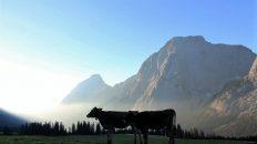 Der Tag erwacht, auf der Hochfeldern Alm. Foto: Knut Kuckel